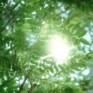 energyharvestingnature